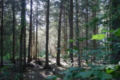 Nadelwald Ruderregattastrecke Oberschleißheim - Foto: Annette Heuwinkel-Otter