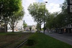 Straßenbäume in München-Sonnenstraße - Foto: Annette Heuwinkel-Otter