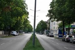 Straßenbäume in Münhen Ungerer Straße - Foto: Annette Heuwinkel-Otter