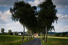 Typisch Lippische Birkenallee - Foto: Frank Möller