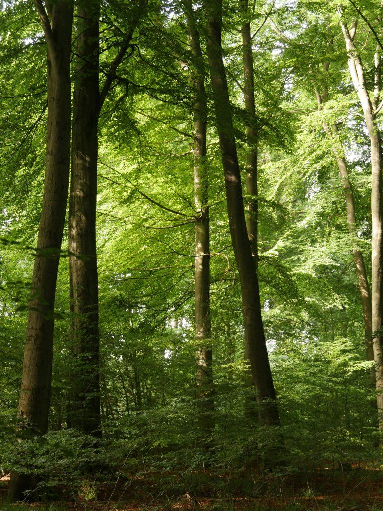 bannwald bei Lemgo-Lüerdissen - Foto: Frank Möller
