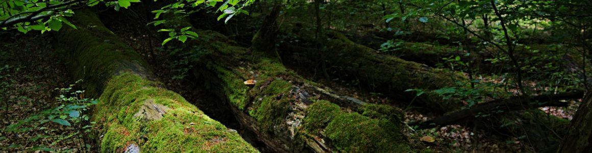 Netzwerk Baum- und Naturschutz